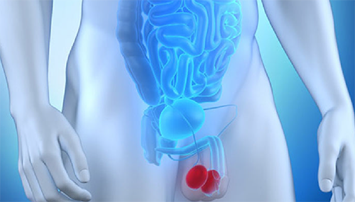 ecocolordoppler testicolare cardiocenter napoli